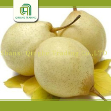 fresh fruit china pear