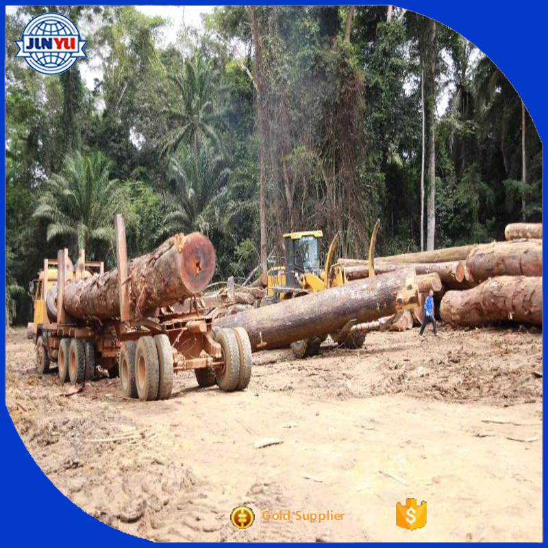 70cm and up wood logs West Africa Tali logs high quality