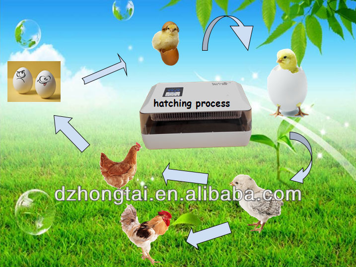 Good Quality & Price 60 egg double-power supply incubator