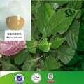 High quality Isatis root Extract,Radix isatidis Powder.Isatis tinctoria L