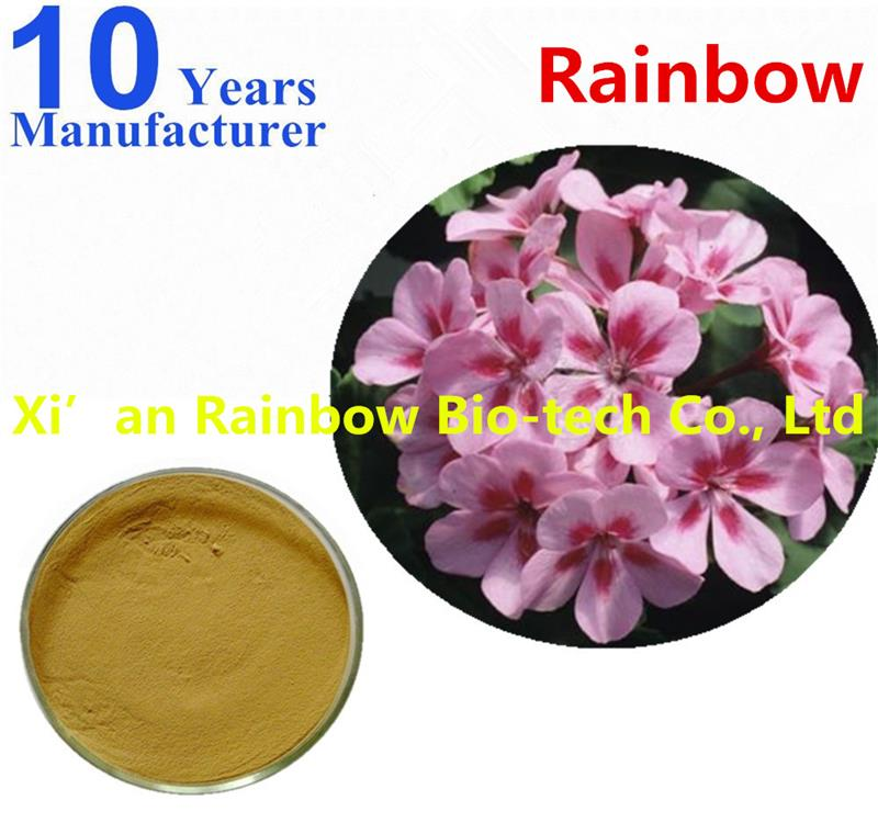 pure natural geranium flower extract powder Professional powder
