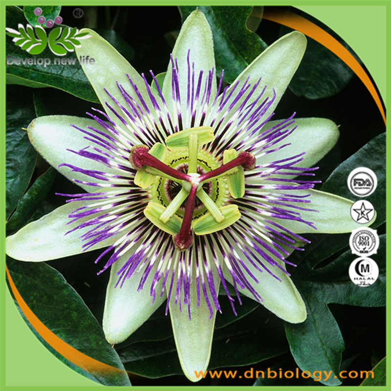 100% naturals plant extract ration 10:1 powder Passion Flower Extract
