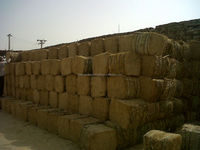 WHEAT STRAW IN BALES