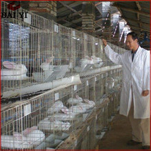 Pet Product Galvanized Steel Wire Rabbit Cage In Kenya Farm