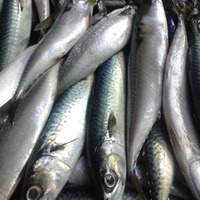 Frezing Spanish mackerel vitamin