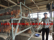 TAIYU Used Poultry Battery Hen Cage