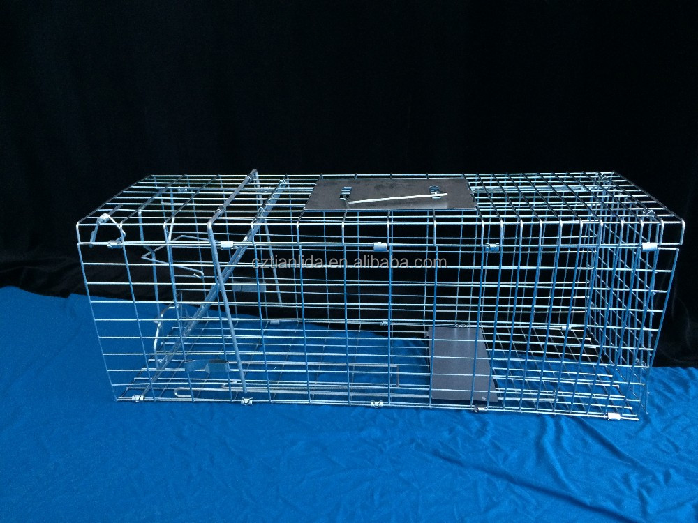 UK standard collapsible humane live squirrel trap cage amazon