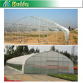 Commercial used galvanized steel frame single span greenhouse for pepper
