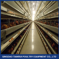 Egg laying chicken cage farming equipment