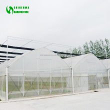 Greenhouse Plastic Clear film Glass Greenhouses Used Solar Hydroponic Greenhouse
