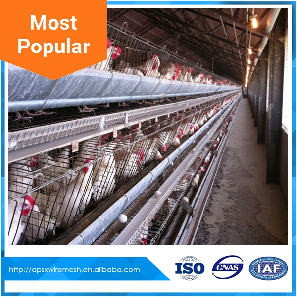 design hot sale a type egg chicken cage for africa market
