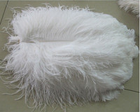 white New genuine ostrich wing plumes feathers