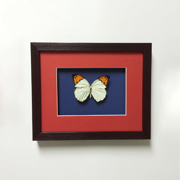 Customized Butterfly Specimen Shadow Box Picture Frame 6x4