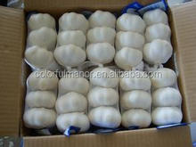 Fresh garlic pure white garlic shandong China,normal white garlic(4.5cm-5.5cm,5-6cm,5.5-6.5cm and 6cm above