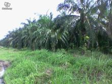 LAND IN Malaysia (75 ACRE)