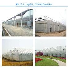 Best quality greenhouse farm for sale