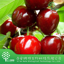 Best Selling High Quality Acerola Cherry Extract Vitamin C Acerola Cherry Extract Vc 25% Acerola Cherry Powder Extract