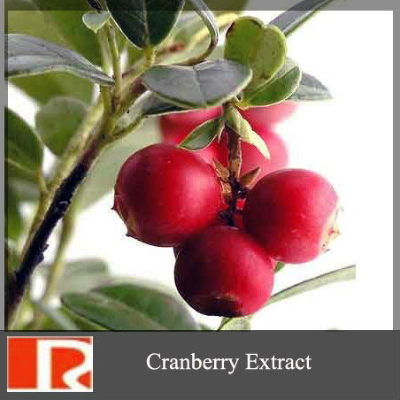 100% Natural Cranberry Extract, Proanthocyanidin, anthocyanidin