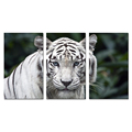 3 Pieces Animal Canvas Wall Art White Tiger Poster Picture Print On Canvas Stretched For Home Decoration