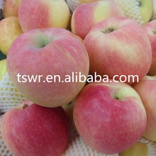 bulk fresh apple fruit for sale with low price