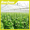 Agricultural Commercial Plastic Hoop Hot House