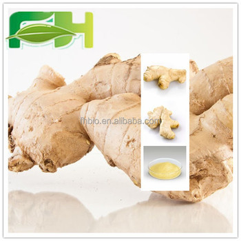 Direct Manufacture Wholesale Top Quality Ginger Root Extract