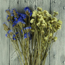 Dried real forget me not flowers wholesale shoot props Myosotis sylvatica