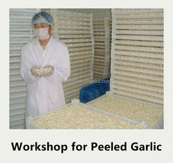 Fresh peeled garlic of the highest quality, pared and peeled by hand