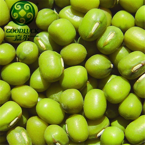 Green Mung Bean Seed Urad Dal From Thailand Products