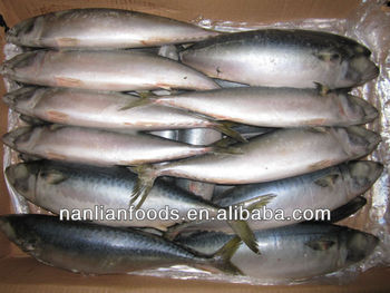 whole round fresh mackerel 400-600g