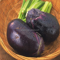 Qie zi zhong zi high purity eggplant seeds Purple Eggplant Seeds