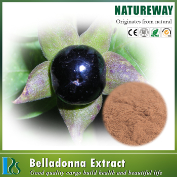 High Quality 100% Natural 1.5% scopolamine powder belladonna extract
