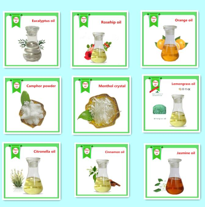 Natural extraction Ho oil,Ho Wood Oil,Ho Leaf Oil for body and medical