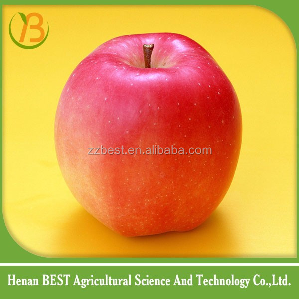 cheap and high quality food of apple fruit hot sale