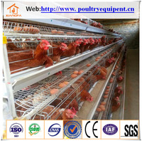 High quality Galvanized Automatic Layer Chicken Cage for sale