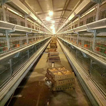Efficient poultry farm prices cages for laying hens