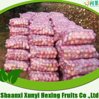 Fresh Red Fuji Apple Fruit Exporters Fresh Fruits