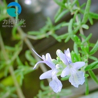 Factory price Rosmarinic acid dried rosemary extract