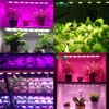 Indoor Garden Greenhouse Horticulture Farm And
