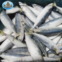 Best Selling Whole Round Fresh Catch