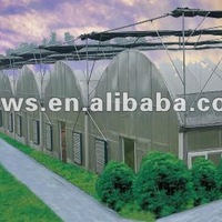 Multi Span Agricultural Greenhouses For Tomato