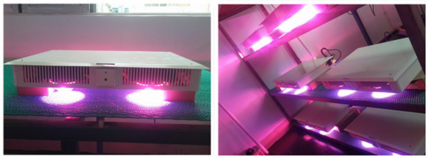 Full spectrum led grow lights 600 watts led grow light panel for flower arrangments