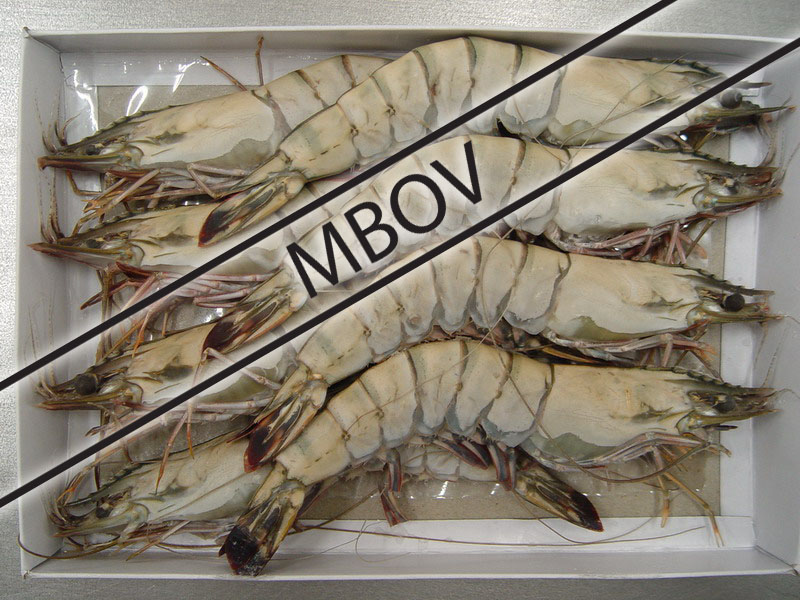 raw frozen HOSO black tiger prawn