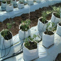 Recycled plastic planter bags for agricultural use