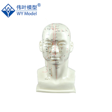 Acupoint Name And Location Guide Head Deluxe Acupuncture Model