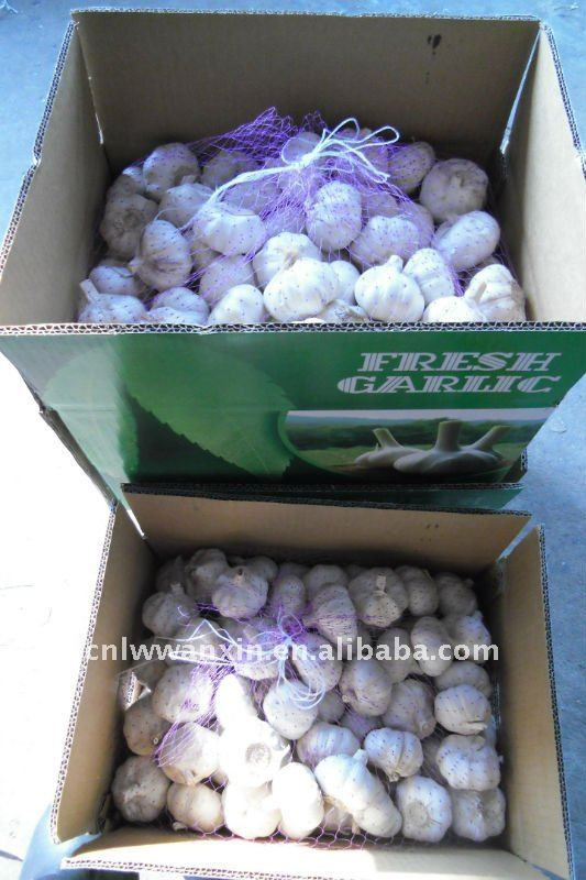 high quality fresh normal white garlic for France