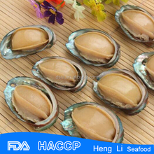 Frozen seafood exporter cooked abalone