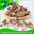 Natural health supplyment morel mushrooms for slae