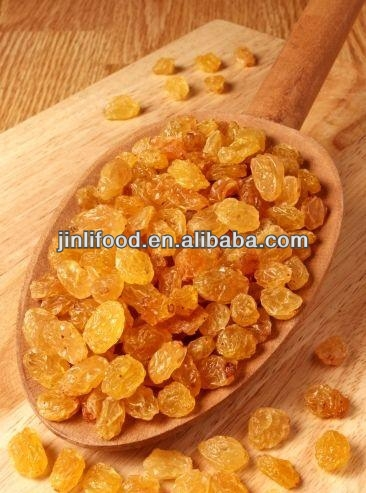 2013 hot selling good process golden raisin from xinjing