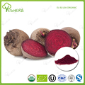 ISO certified beet root powder wholesale